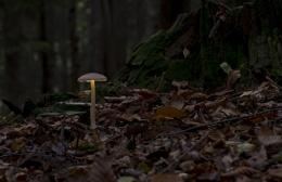 Glowy 'shrooms