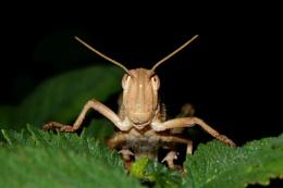 Grasshopper in the bushes.