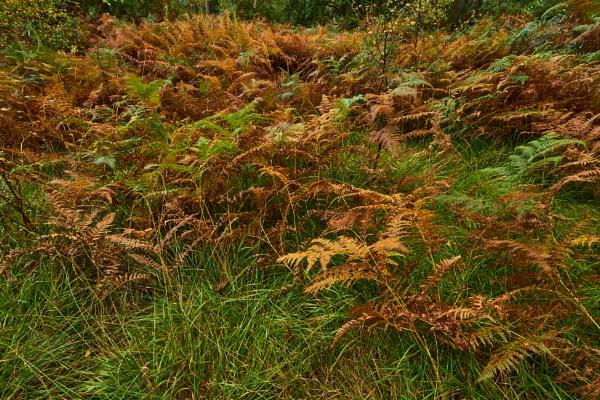 Autumn Ferns by JJGEE