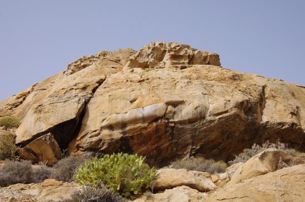 Succulent Rocks II by PentaxBro