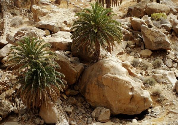 Palm Oasis by PentaxBro