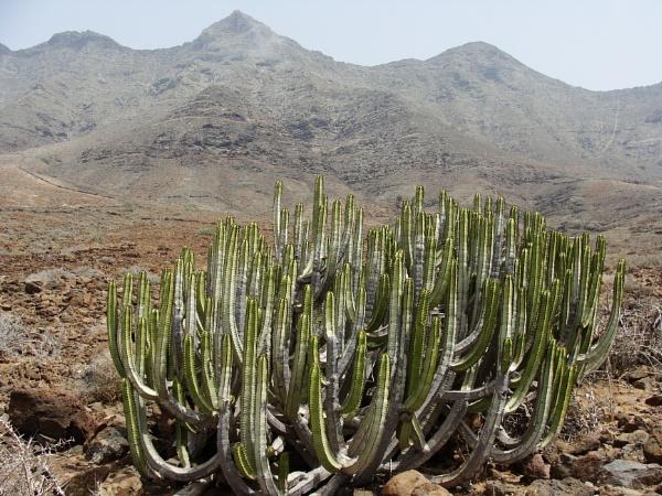 Desert Plants 2 by PentaxBro