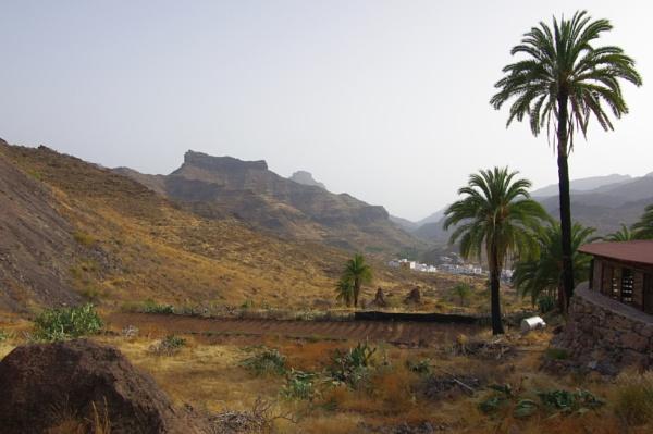 Desert Plants 5 by PentaxBro