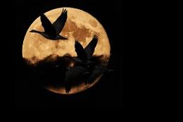 Nocturnal Migration