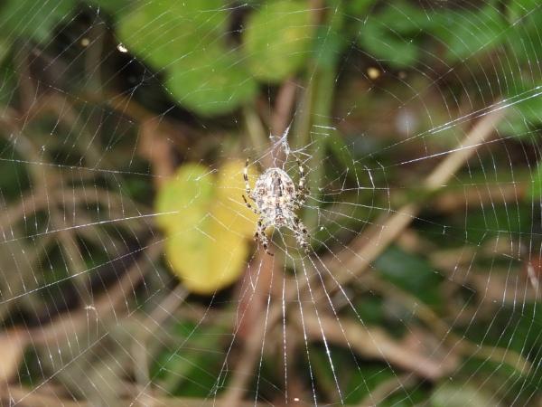 spider web by shye