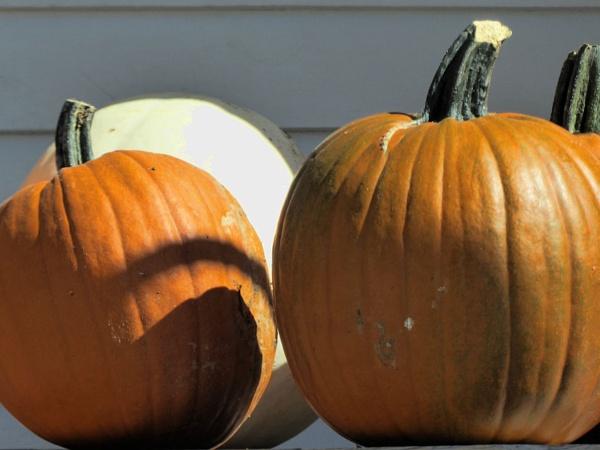 Pumpkin Shadows by Joline