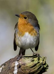 Hi Robin
