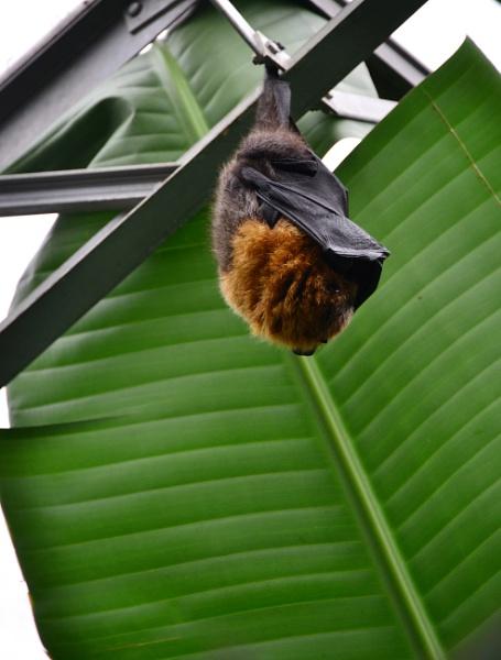 Bat by jb_127