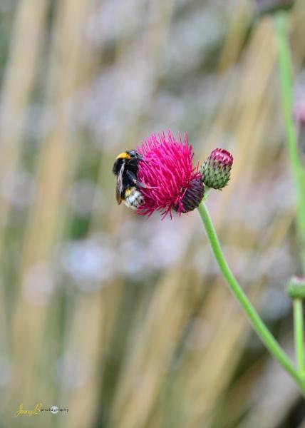 Gathering Pollen by jb_127