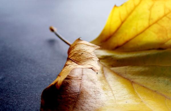 Autumn Leaves -1 by helenlinda