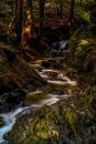 Woodland Wonderland by fynephotography