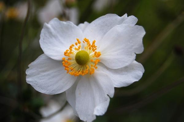 Flower by Ozzie55