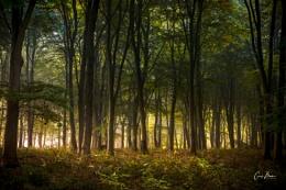 Misty Wood