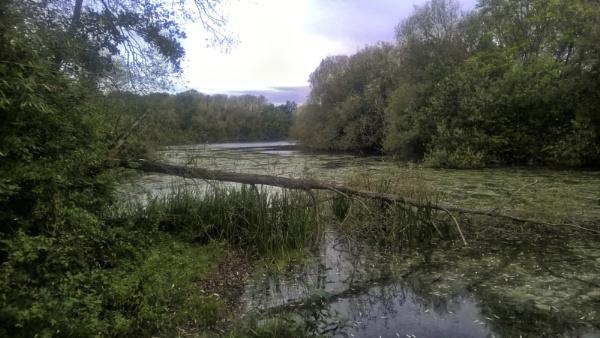 Watermead Park by RLF