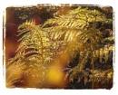 Golden Bracken by Irishkate