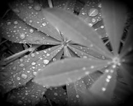 Just A Drop Of Rain
