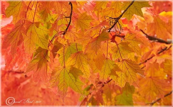 Autumn greens and golds by DavidBird