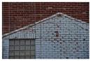 Brick wall by notsuigeneris