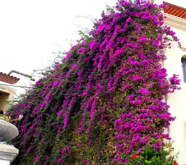 Wall Flowers by ddolfelin