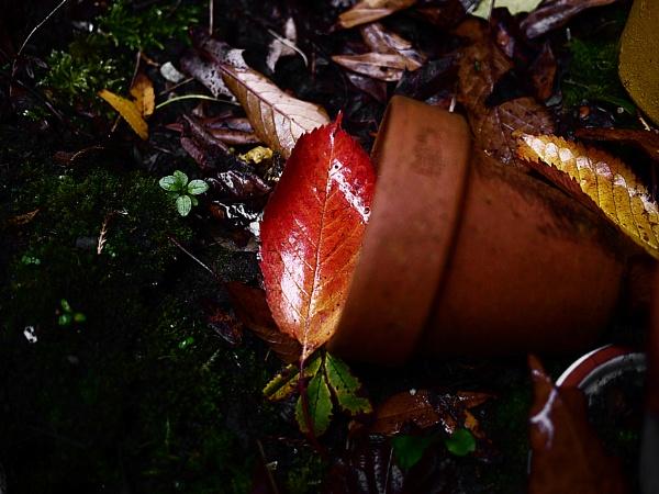 Autumn by kaybee