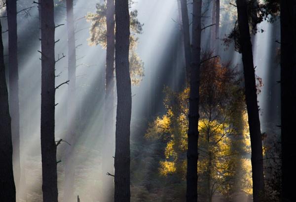 Light and dark by Satiny