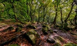Padley Gorge Gold