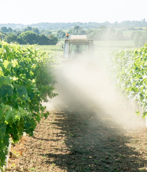 Dusting the grapes!! by bucket