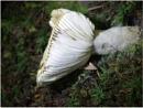 Mushroom by sueriley