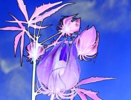 Ghostly Wildflower
