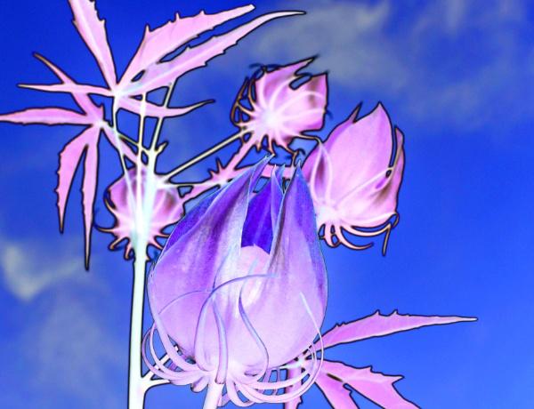 Ghostly Wildflower by Kissplash