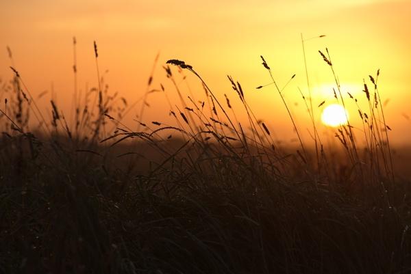 grass by alfpics