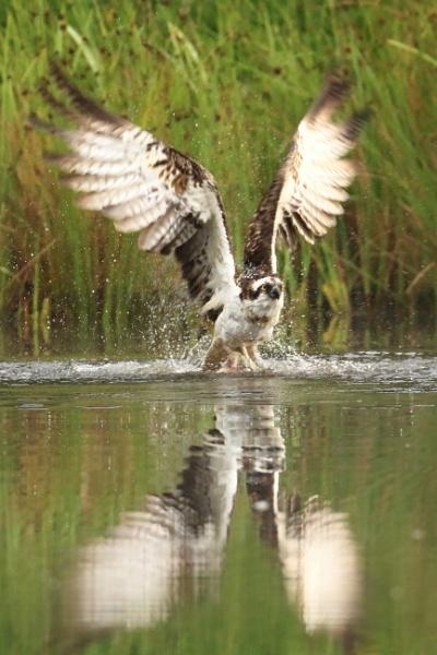 Powerful Landing by deanjohn