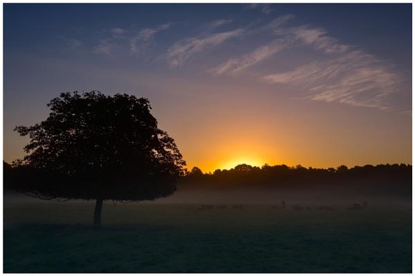 Morning Mist by Satlight