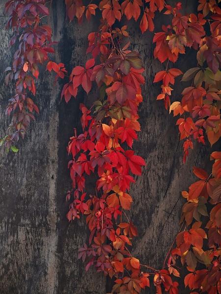 full red by LaoCe