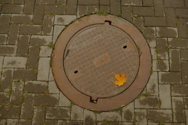 Yellow leaf by Zenonas