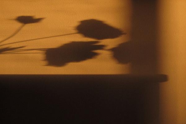 october shadows by leo_nid
