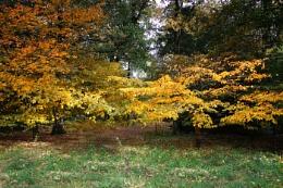 More Auntumn Colour - Packwood House NT