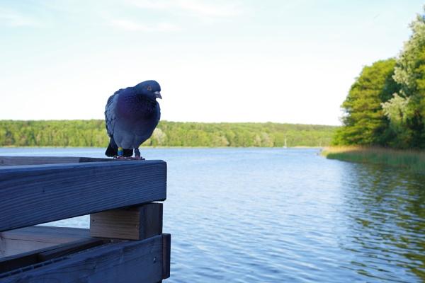 Dove Lake by PentaxBro