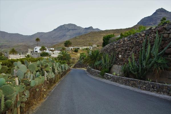 Cactus Avenue by PentaxBro