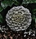 Charred flower by mohikann23