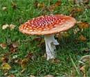 Fungi by MalcolmM
