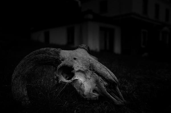 Creepy Sheepy by Craigie10