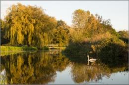 Tincleton Pond