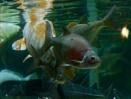 sealitfe aquarium by sparrowhawk