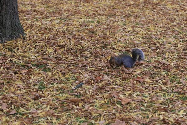 autumn food by HoneyT