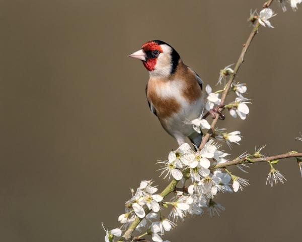 Springtime by hasslebladuk