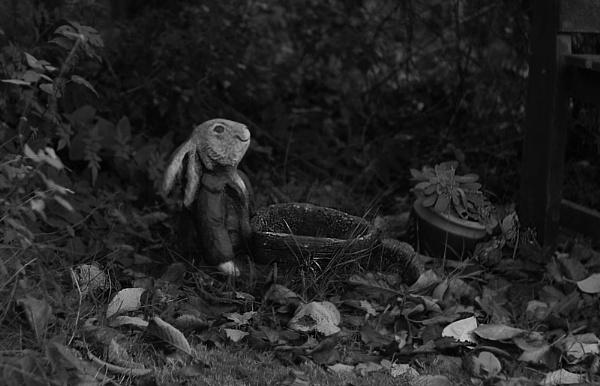 Gardening Bunny by bobby55