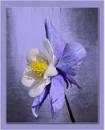 Purple Satin by sweetpea62