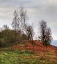 Gunners Howe Trees & Fern by Irishkate