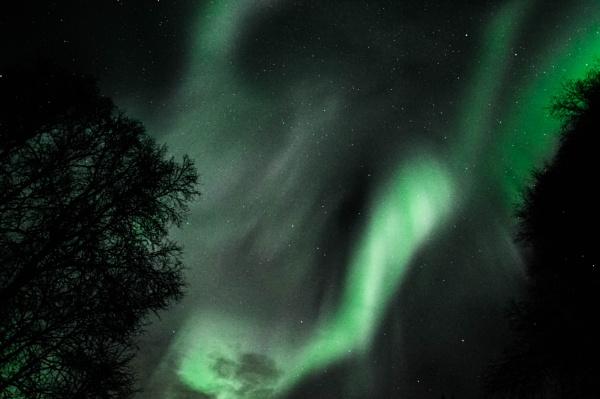 Night  Wings of Green by Rebeak
